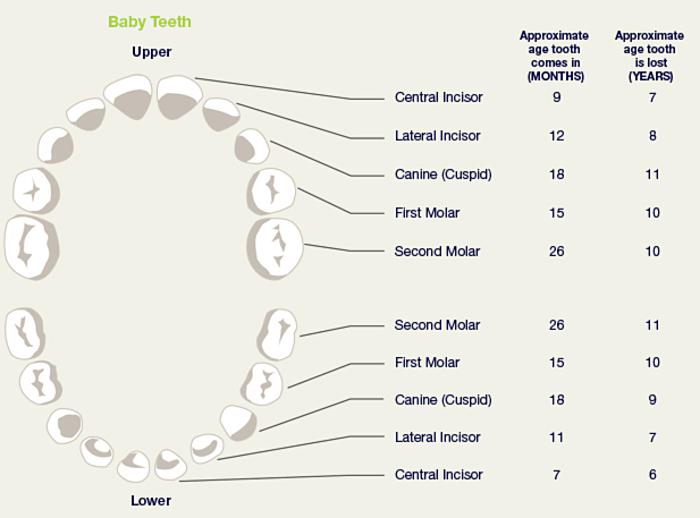 Carlisle Dentistry for Kids | Child Dental Development | Aldente ...